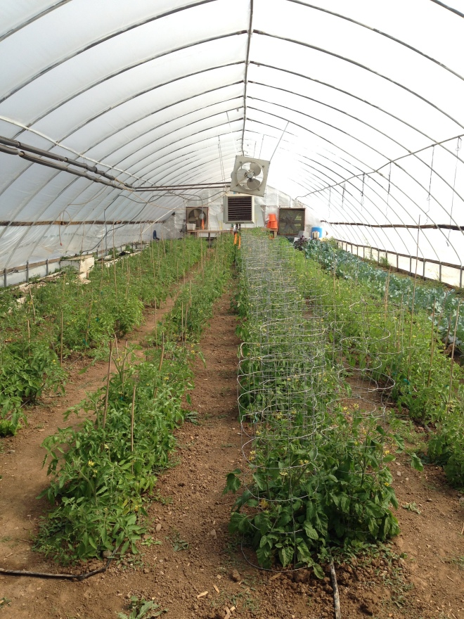 One of the greenhouses at Red Willow Farm in Taos