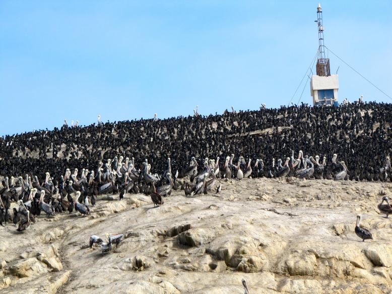 Birds, birds, and more birds on one of the Islas Ballestas.