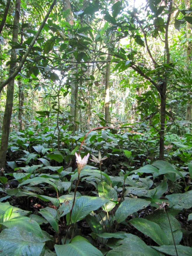 Lovely sights of nature on our jungle hikes.
